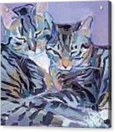 Hugs Purrs And Stripes Acrylic Print by Kimberly Santini