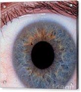Human Eye Acrylic Print