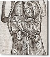 Human Male Torso, 16th Century Acrylic Print by Middle Temple Library