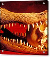 Human Skull  Alligator Skull Acrylic Print by Garry Gay