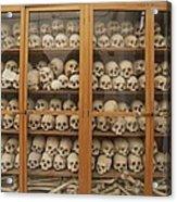 Human Skulls And Femurs Fill A Display Acrylic Print by Tino Soriano