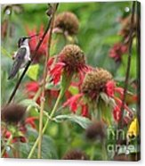 Hummer At Rest Acrylic Print