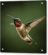 Hummer In The Garden One Acrylic Print by Michael Putnam