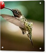 Hummers In The Garden Three Acrylic Print by Michael Putnam