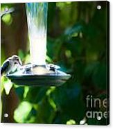 Humming Bar Acrylic Print