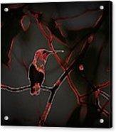 Hummingbird - Ruby-throated Hummingbird- Different Acrylic Print
