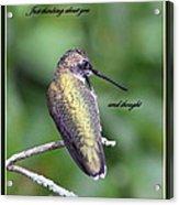 Hummingbird - Thinking Of You Acrylic Print