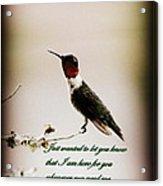 Hummingbird - Cards Acrylic Print