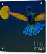 Hummingbird Moon Acrylic Print by Al Bourassa