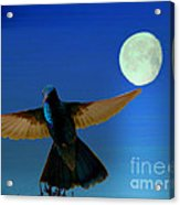 Hummingbird Moon II Acrylic Print by Al Bourassa