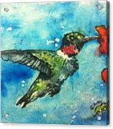 Hummingbird Sips Acrylic Print