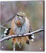 Hummingbird Stretch Two Acrylic Print