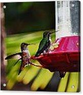 Hummingbirds At The Feeder Acrylic Print