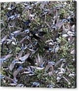 Hundreds - Tree Swallows Acrylic Print