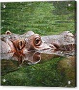 Hungry Hippo Acrylic Print