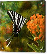 Hungry Little Butterfly Acrylic Print