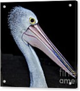 Hungry Pelican Acrylic Print