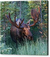 Hunting Some Munchies Acrylic Print