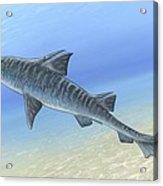 Hybodus Shark, Artwork Acrylic Print