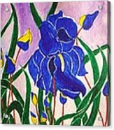 Hybrid Iris Acrylic Print
