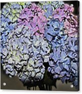 Hydrangea Boquet Acrylic Print