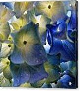 Hydrangea Close-up Acrylic Print