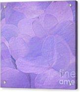 Hydrangea Whispers Acrylic Print
