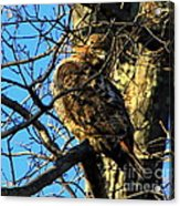 I Am Watching You  Acrylic Print