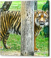 I Can See You.. Acrylic Print
