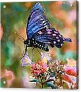 I Dream Of Rainbow Colors Acrylic Print