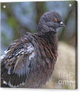 I Have The Look Acrylic Print