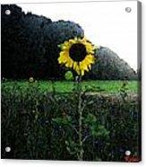 I Love Sun Acrylic Print