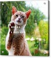 I Want Food Cat Acrylic Print