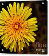I Want To Be A Flower... Acrylic Print