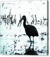Ibis By Pintail Nature Drive Cameron Prairie Nwr La Acrylic Print