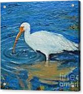 Ibis In Pond Acrylic Print