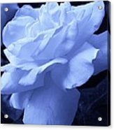 Ice Blue Rose Acrylic Print