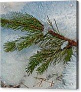 Ice Crystals And Pine Needles Acrylic Print
