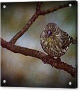 Ice Droplet Bird Acrylic Print