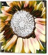 Iced Oatmeal Cookie Sunflower Acrylic Print by Devalyn Marshall