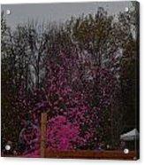 Icee Pink Cold Water Challenge Acrylic Print