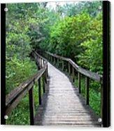 Ichetucknee Forest Pathway Acrylic Print
