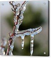 Icy Branch-7529 Acrylic Print