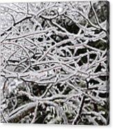 Icy Dreams Acrylic Print
