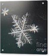 Icy Acrylic Print