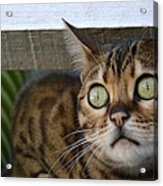 If Looks Could Kill Acrylic Print