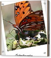 If You Need Me - Butterfly Acrylic Print