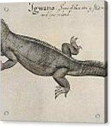 Iguana, 1585 Acrylic Print