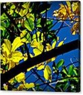 Illuminated Elm Leaves Acrylic Print