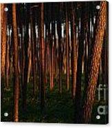 Illuminated Forest Acrylic Print